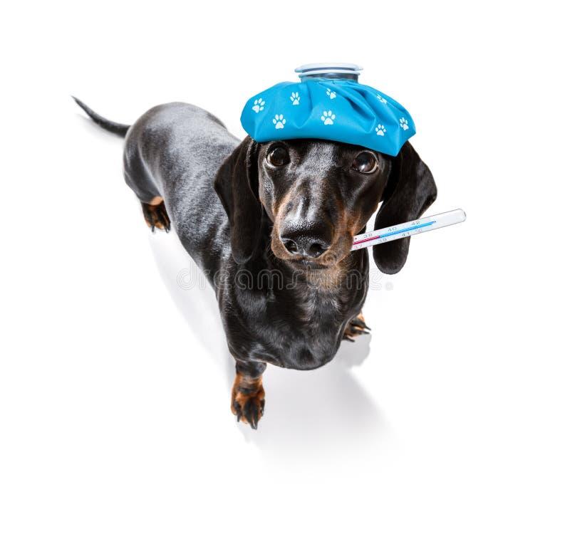 Zieke zieke hond met ziekte stock afbeelding