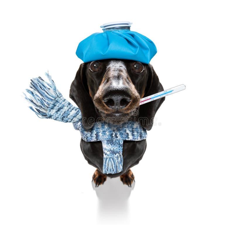 Zieke zieke hond met ziekte stock foto