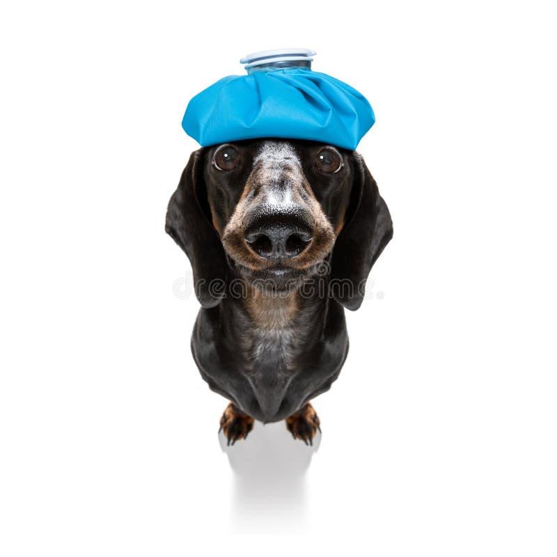 Zieke zieke hond met ziekte royalty-vrije stock foto's