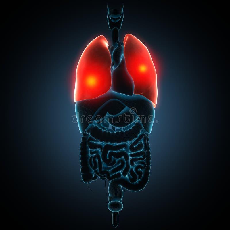 Ziekteillustratie van menselijke longen royalty-vrije illustratie