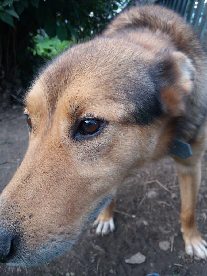 Ziel van een Hond stock afbeeldingen