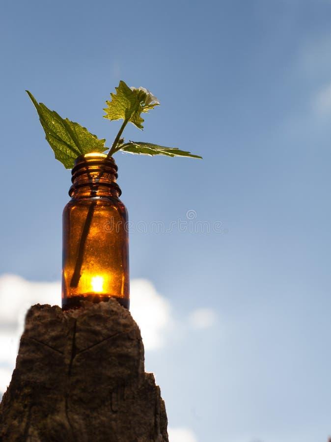 Zielarska terapia - Naturalni remedia zdjęcia royalty free
