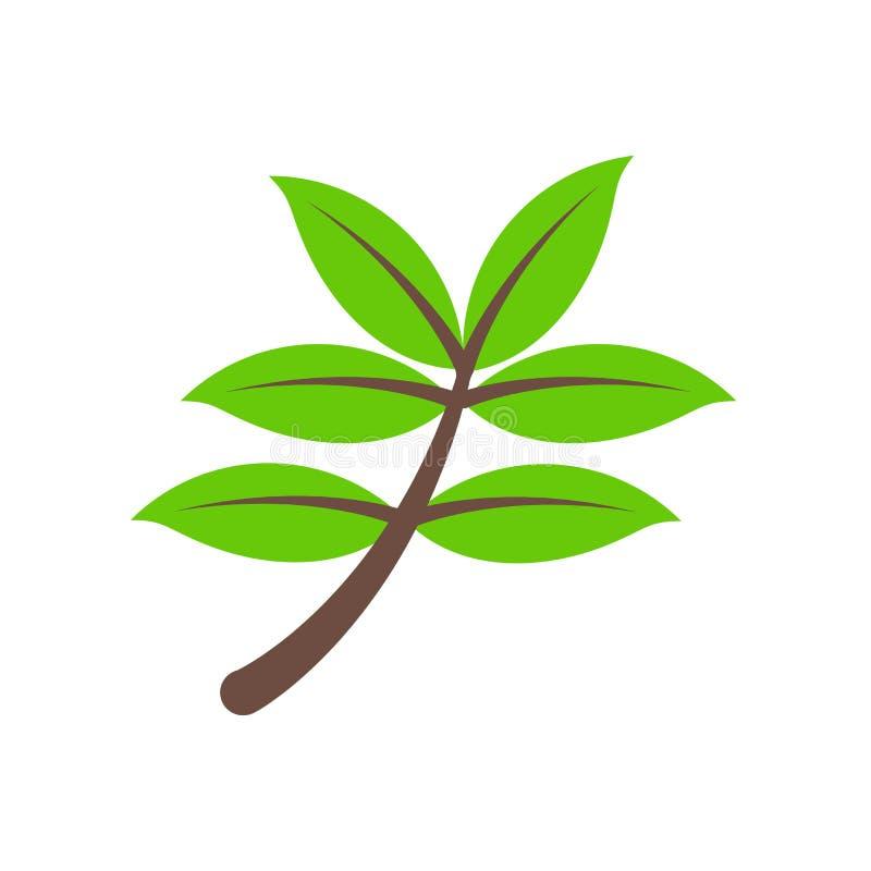 Zielarski ikona wektoru znak i symbol odizolowywający na białym tle royalty ilustracja