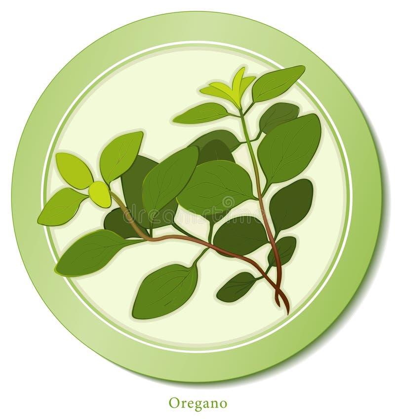 zielarski włoski oregano ilustracja wektor