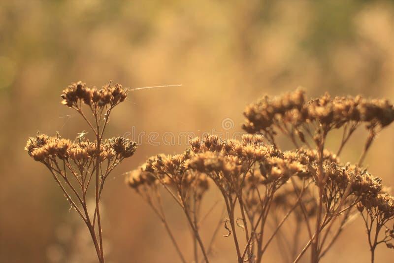 Zieleń i kolor żółty w kratkę obraz stock