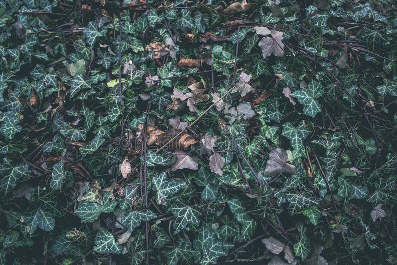 Zieleń i suszy liście dla tła zdjęcie stock