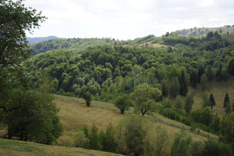 Zieleń lasy i pola obraz royalty free