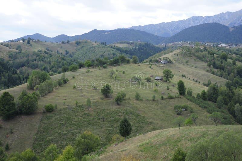Zieleń lasy i pola obraz stock