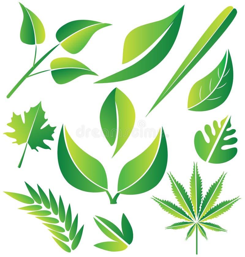 Zieleń leafs kolekcja ilustracji