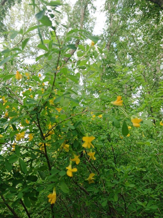 Zieleń liście drzewo w parku Kazan zdjęcie stock