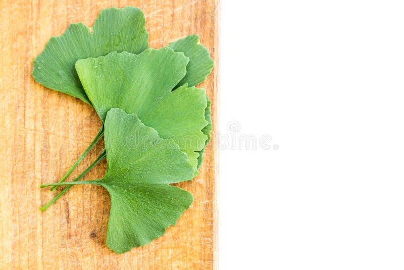 Zieleń liście Ginkgo biloba roślina odizolowywająca na białym tle Leczniczy liście relikwia drzewny miłorząb przeciw drewnianemu obraz royalty free