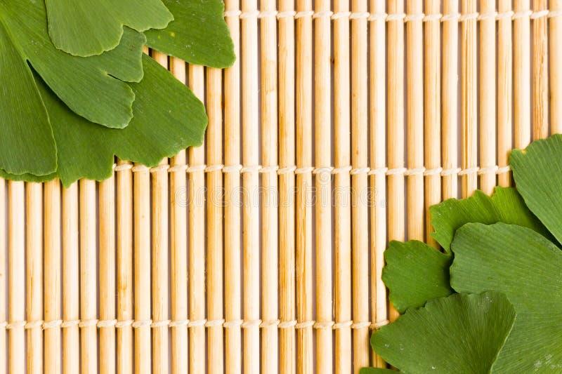 Zieleń liście Ginkgo biloba roślina odizolowywająca na tle drewniani kije Leczniczy liście relikwii drzewa miłorząb zdjęcia royalty free