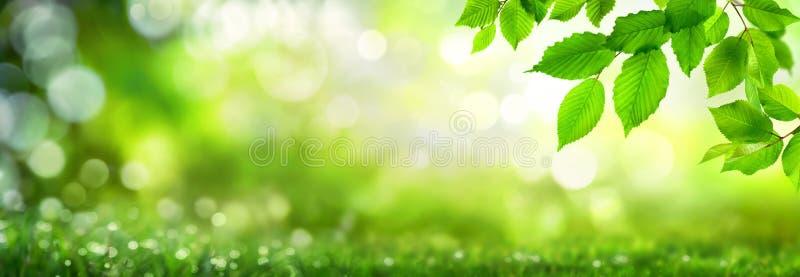 Zieleń liście na bokeh natury tle