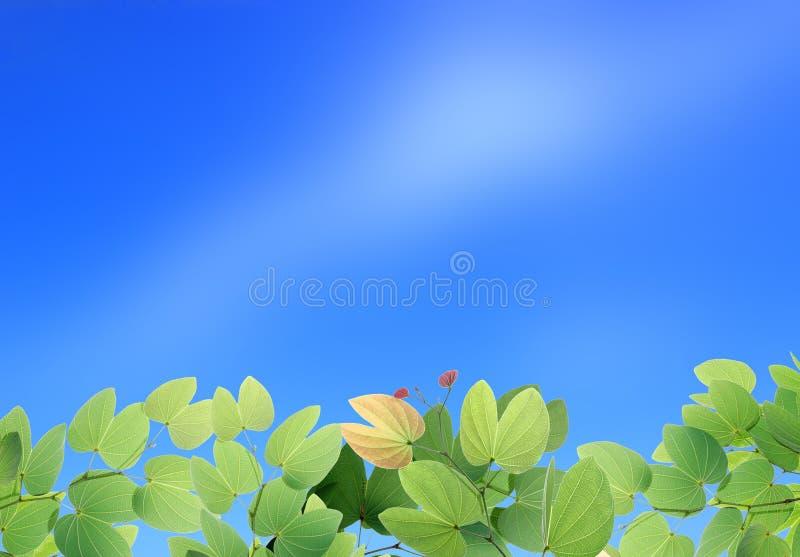 Zieleń liście na Pięknym jasnym niebieskim niebie zdjęcia royalty free