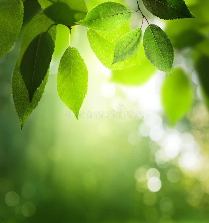 Zieleń liście w pogodnym lesie zdjęcia royalty free