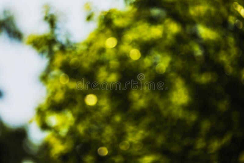 Zieleń liście w słońcu po środku wiosny zdjęcie stock