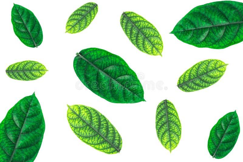 Zieleń liście wiele liście zdjęcie stock