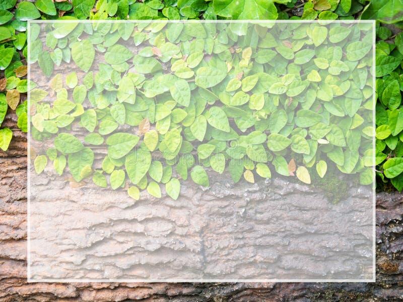 Zieleń liście wtykający na drewnianej biel ramie dla teksta i zawartości wkładu kopii przestrzeni Stosowny dla tła jako zdjęcia stock