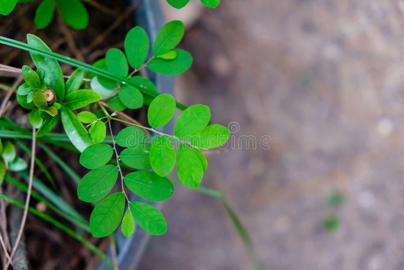 Zieleń liście z światła słonecznego jaśnieniem zdjęcia royalty free
