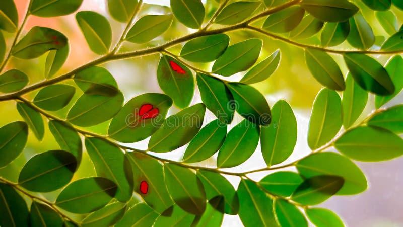 Zieleń liście z czerwonym punktem obraz stock
