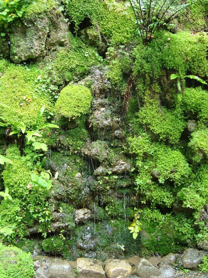 Zieleń na zieleni zdjęcia stock
