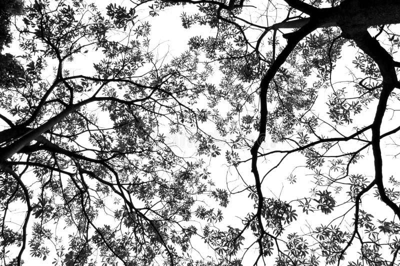 Download Zieleń Opuszcza Monochrom I Rozgałęzia Się Zdjęcie Stock - Obraz złożonej z jaskrawy, łamliwość: 53788620