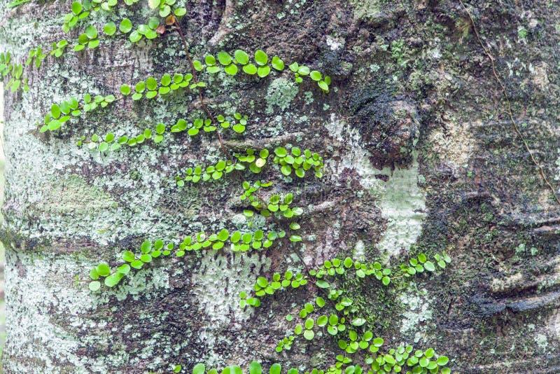 Zieleń opuszcza natur tła, Mali natury zieleni liście round zdjęcia stock