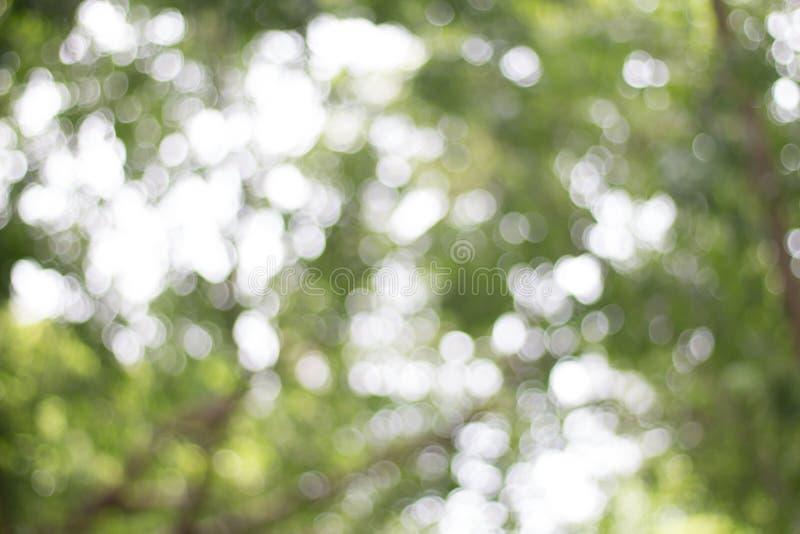 Zieleń opuszcza tło tropikalna lasowa roślina zdjęcie royalty free