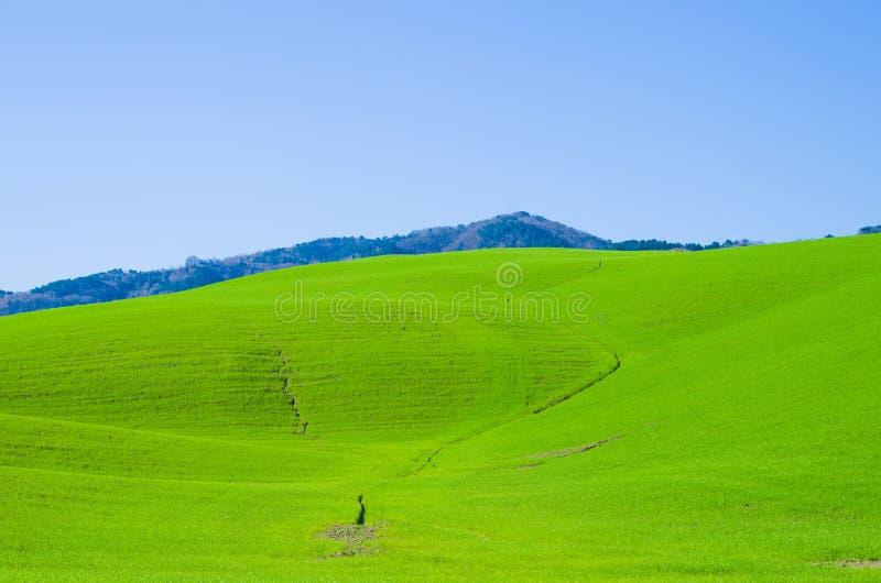 Zieleń pola wieś pod niebieskim niebem zdjęcia royalty free