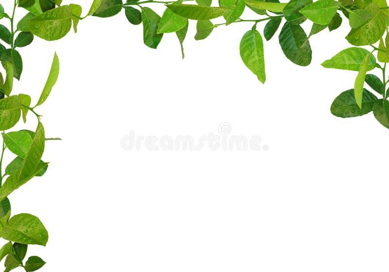 zieleń ramowi liść zdjęcia stock