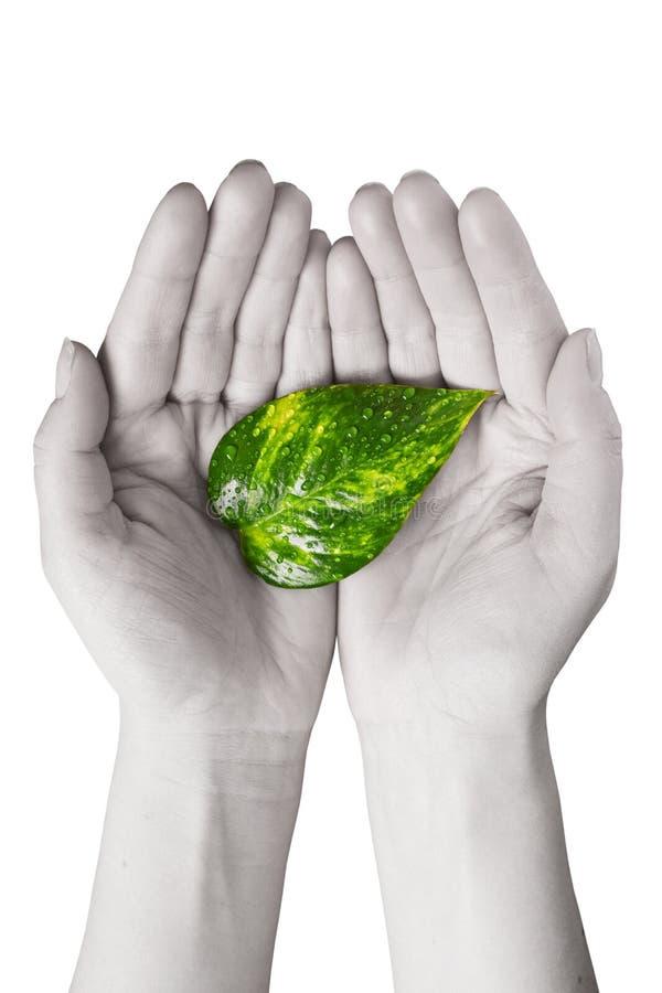 zieleń wręcza ludzkiego liść obraz stock