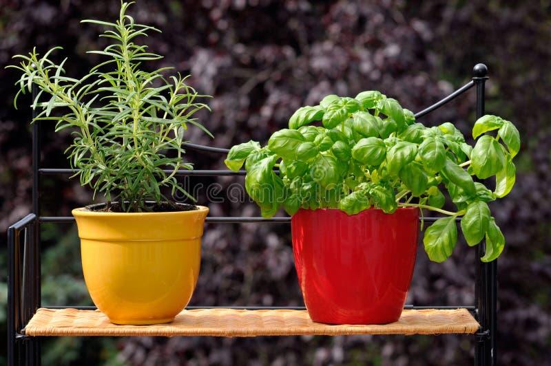 ziele świezi garnki zdjęcie stock
