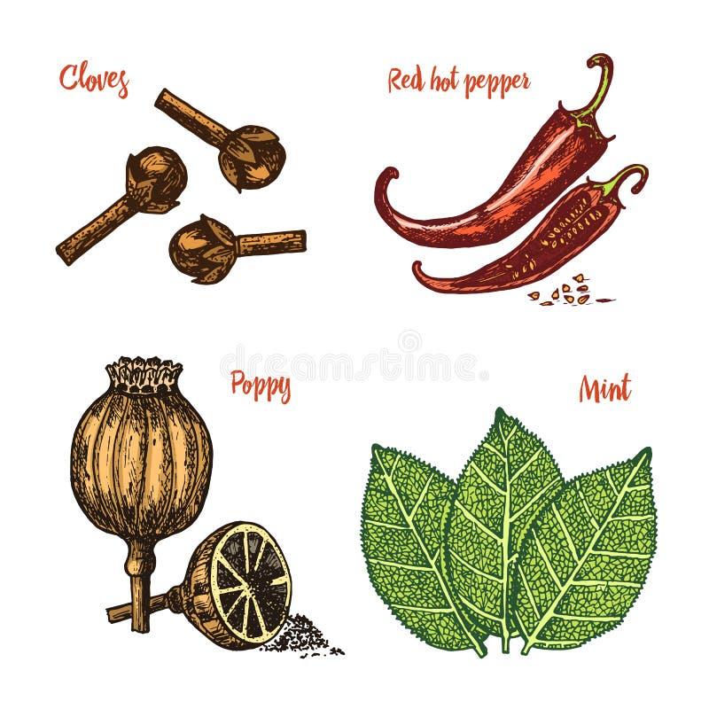 Ziele, condiments i pikantność, Czerwony pieprz, maczek, mennica i cloves dla menu, Organicznie jarosz lub rośliny ilustracji