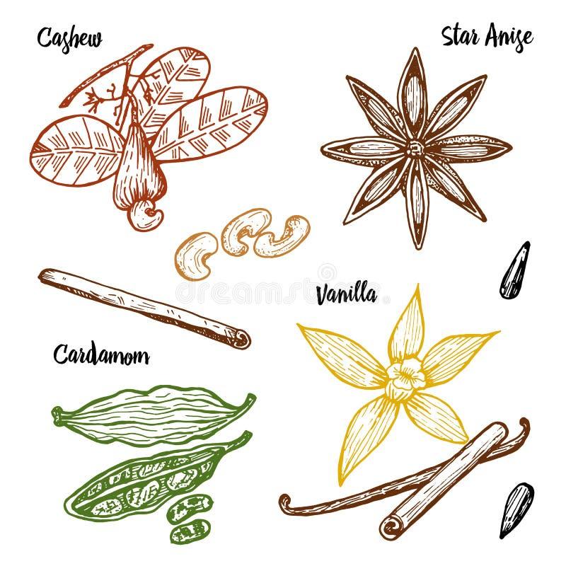 Ziele, condiments i pikantność, Wanilia i cynamon, nerkodrzew ilustracji