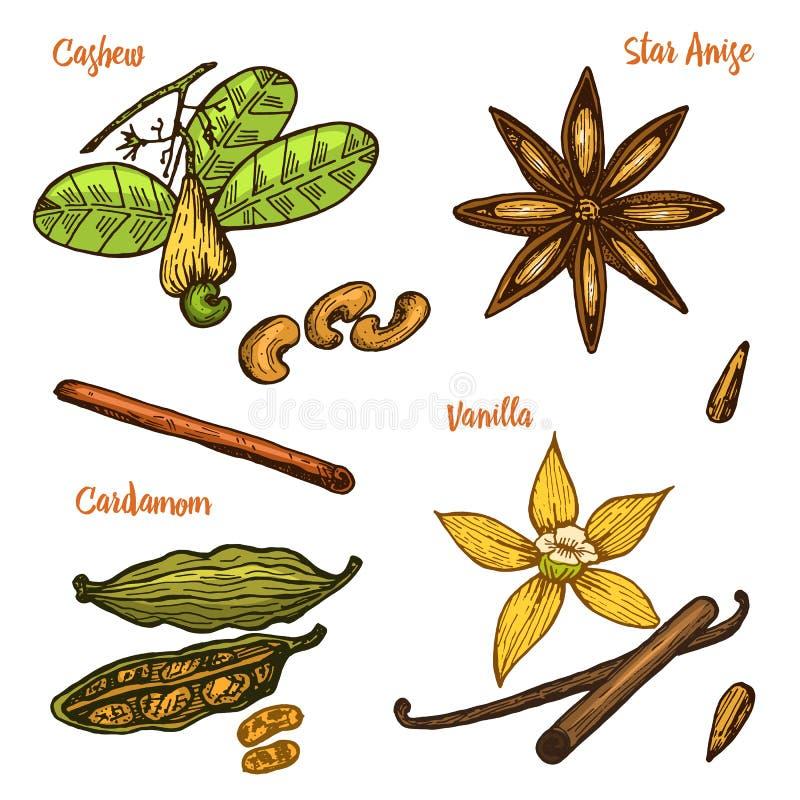 Ziele, condiments i pikantność, Wanilia, cynamon, nerkodrzew, kardamon, ziarna i gwiazdowy anyż dla menu, organicznie royalty ilustracja