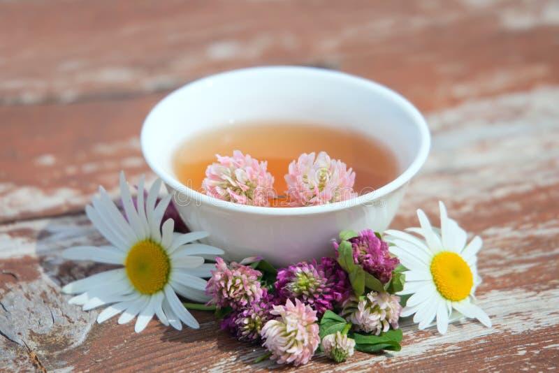 Ziele herbata od kuracyjnych rośliien na drewnianej powierzchni Ziołowy student medycyny fotografia stock