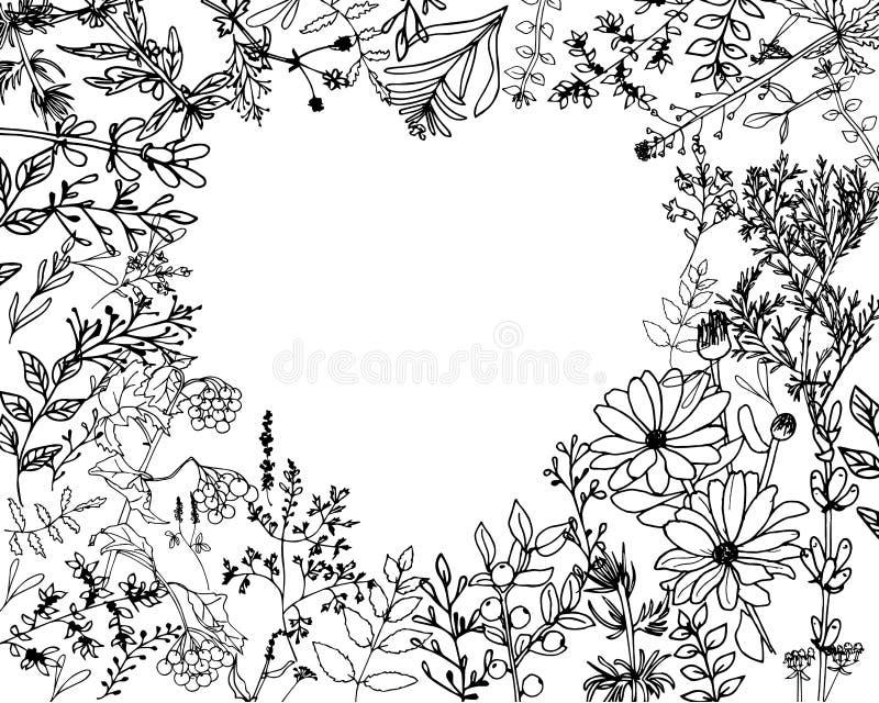 Ziele i dzicy floweres Set botanika kwiaty ilustracja wektor