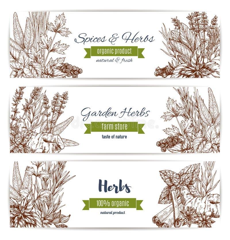 Ziele i pikantności organicznie roślina kreślą sztandaru set ilustracji