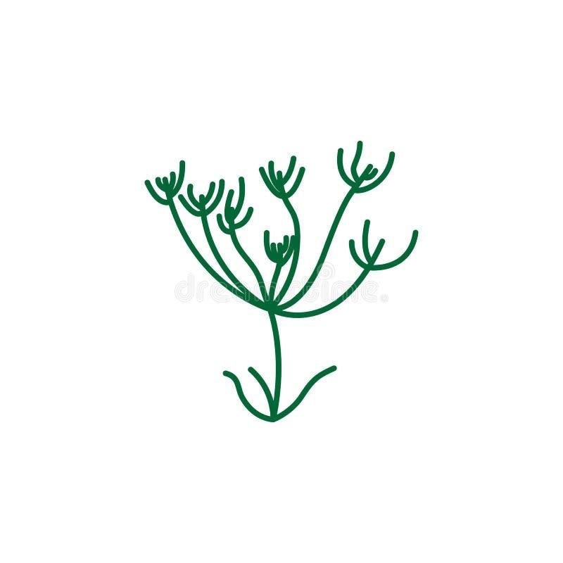 Ziele, kminkowa ikona Element zielarska ikona dla mobilnych pojęcia i sieci apps Szczegółowy ziele, kminkowa ikona może używać dl royalty ilustracja