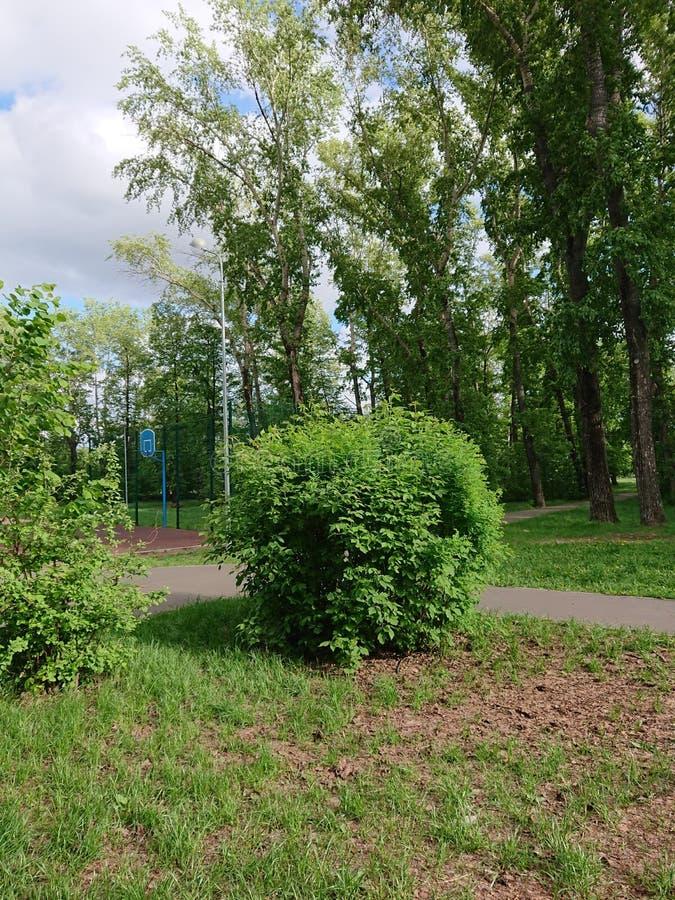 Ziele? li?cie drzewo w parku Kazan obrazy stock