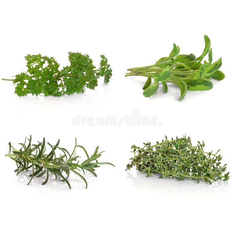 ziele pietruszki rozmarynowa mądra macierzanka zdjęcia stock