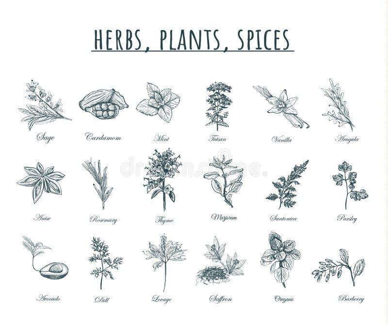 Ziele, rośliien i pikantność wektoru ilustracja, ilustracji