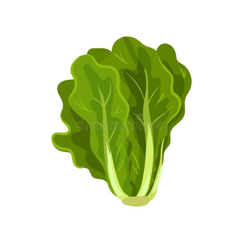 Zieleni świezi sałatkowi liście, zdrowy organicznie jarski jedzenie, wektorowa ilustracja na białym tle ilustracja wektor