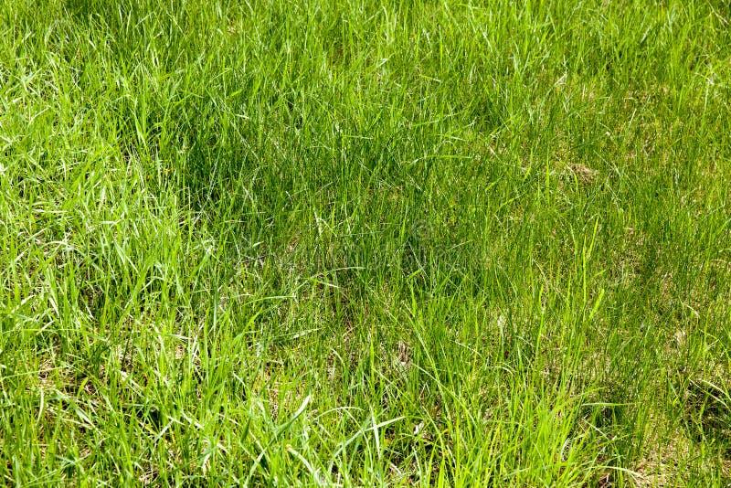 zieleni cienka trawa zdjęcia royalty free