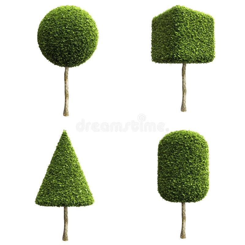 Zieleni dekoracyjni krzaki lub drzewa ilustracji