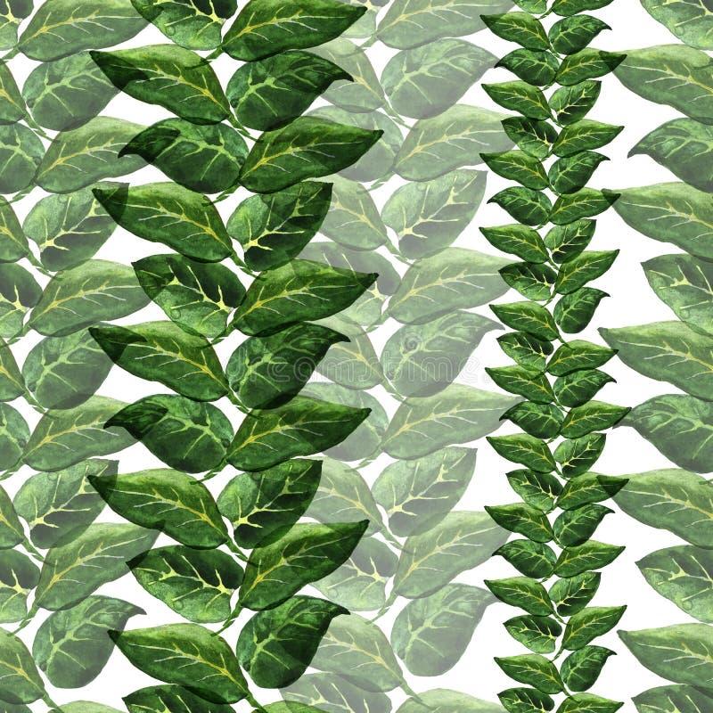 zieleni deseniowi winogrady obrazy royalty free