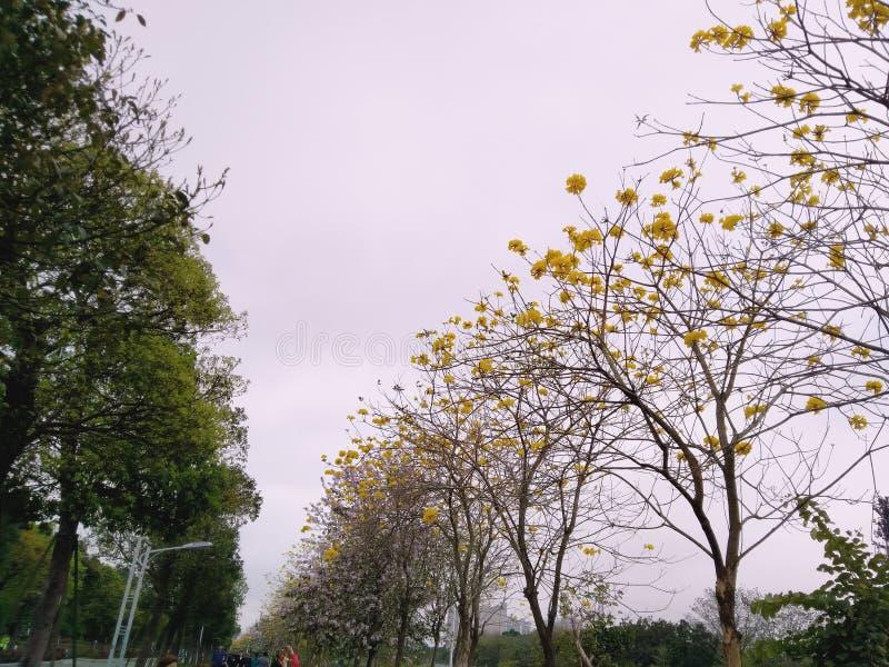 Zieleni drzewa i kolorów żółtych kwiaty zdjęcia royalty free