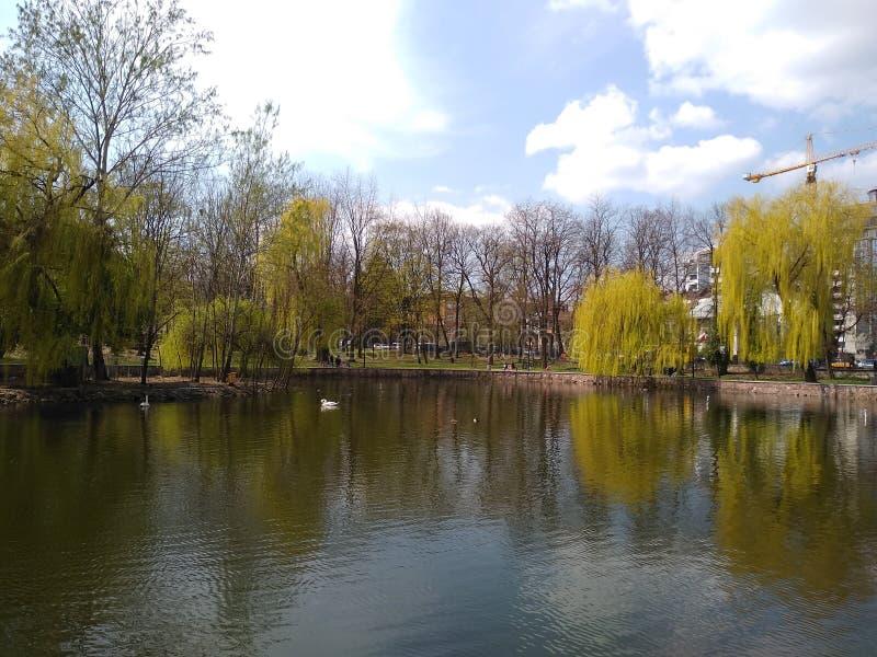 Zieleni drzewa i niebieskie niebo w miasto parku ivano-Frankivsk, Ukraina wczesna wiosna zdjęcie royalty free
