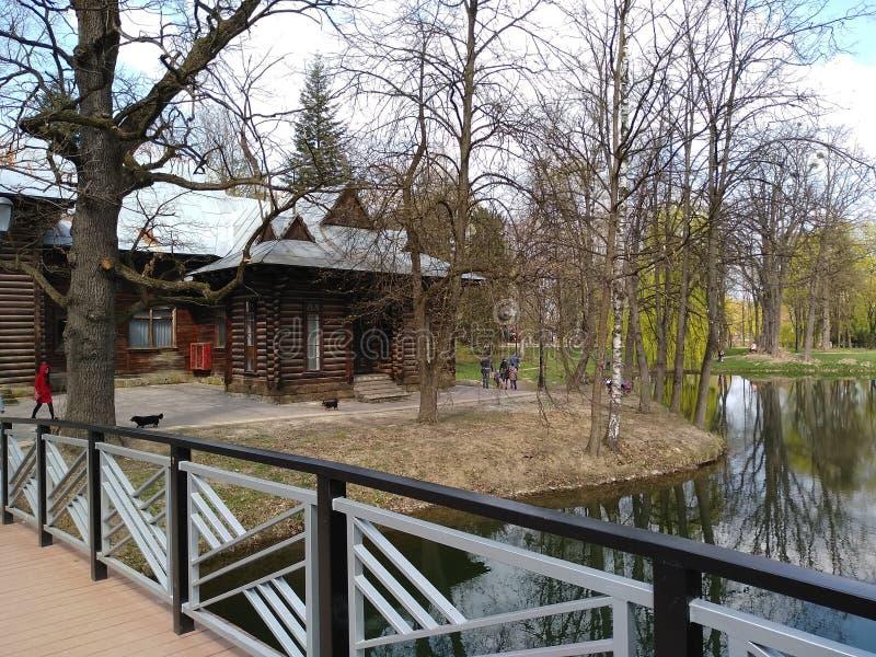 Zieleni drzewa i niebieskie niebo w miasto parku ivano-Frankivsk, Ukraina wczesna wiosna fotografia royalty free