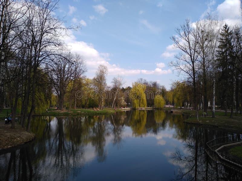 Zieleni drzewa i niebieskie niebo w miasto parku ivano-Frankivsk, Ukraina wczesna wiosna obrazy royalty free